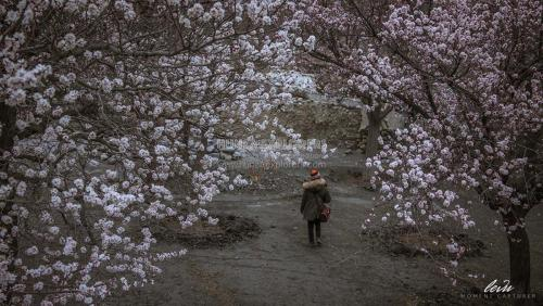 Hunza-Blossom-Tour-Vietnamese-Group-with-HunzaExplorers-1001