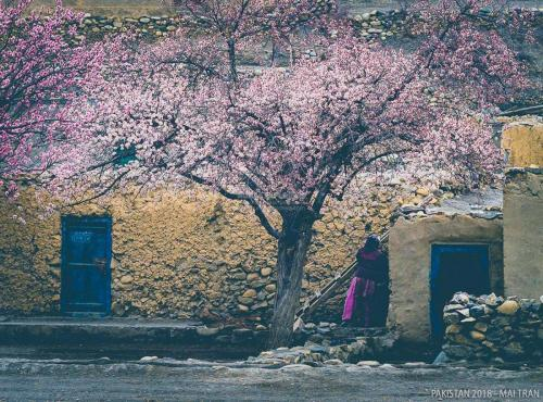 Hunza-Blossom-Tour-Vietnamese-Group-with-HunzaExplorers-1011