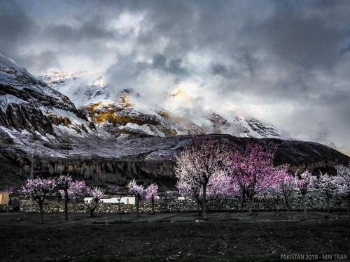 Hunza-Blossom-Tour-Vietnamese-Group-with-HunzaExplorers-1031
