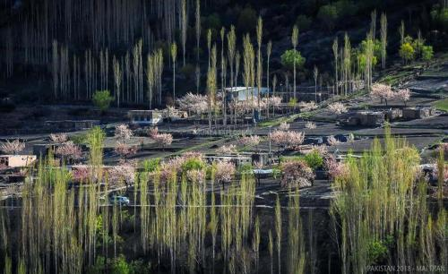 Hunza-Blossom-Tour-Vietnamese-Group-with-HunzaExplorers-1034