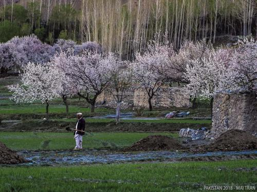 Hunza-Blossom-Tour-Vietnamese-Group-with-HunzaExplorers-1038